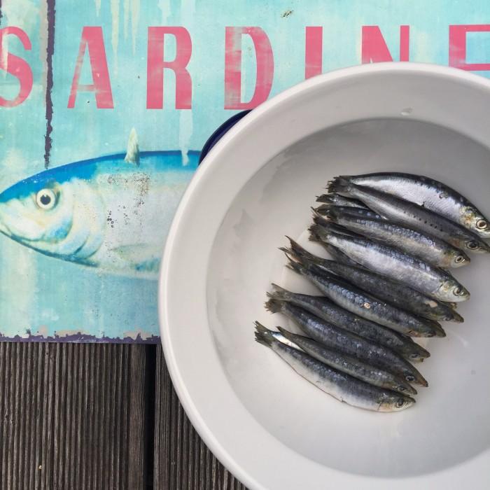 Sardinen-in-Thymian-Zitronenmarinade-gebraten-und-Griechischer-Salat-1